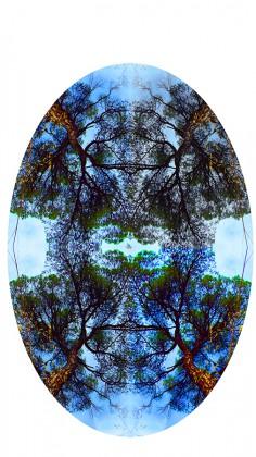 para revelar-4pinos color saturado-seccion oval